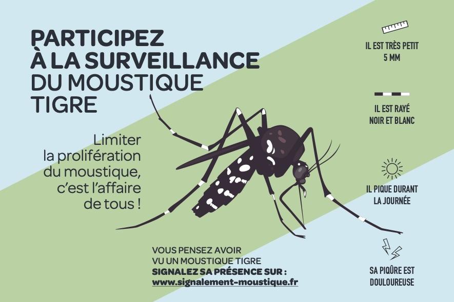 Limiter la prolifération du moustique tigre, c'est l'affaire de tous
